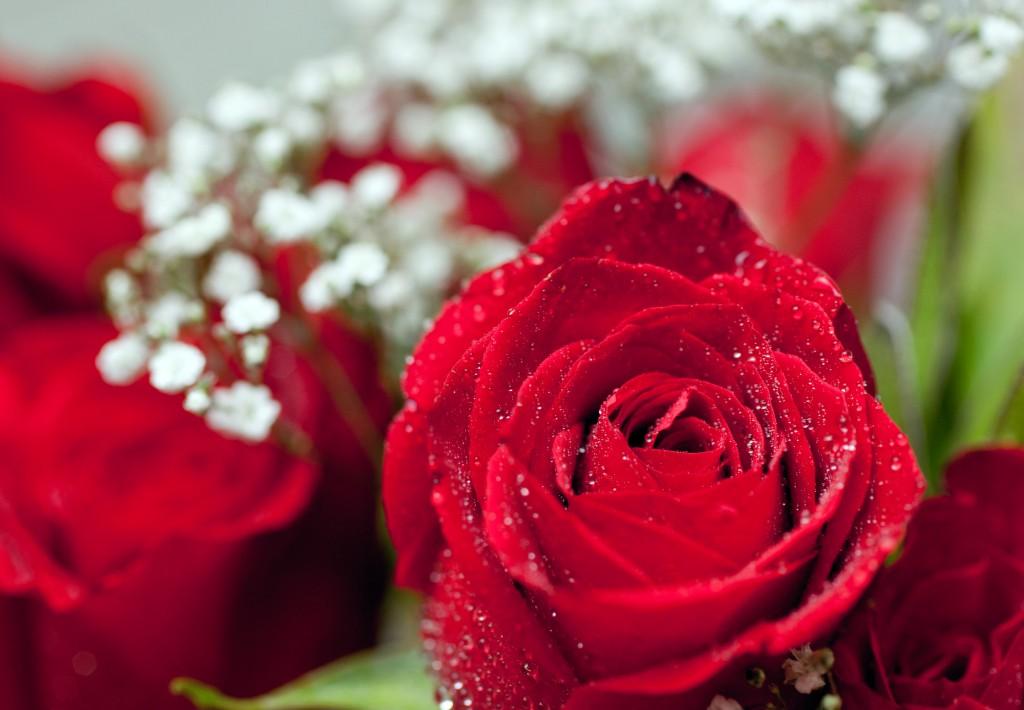 ruusu-aitienpaiva-aidille-sijaissynnytys-kohtu